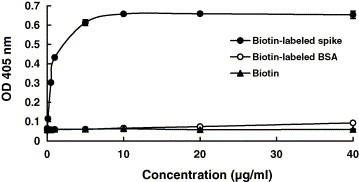Analysis of SARS-CoV S protein and ACE2 interaction by biotinylated ELISA. The wells were coated with 1 ng of ACE2 and challenged with various amounts of biotin-labeled S protein (●), biotin-labeled BSA (○) or biotin (▴). Following three washes, peroxidase-conjugated avidin and chromatic substrate were sequentially added. The absorbance was read at 405 nm in an ELISA plate reader. Values are mean ± standard error of four independent assays.