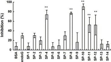 Inhibitory effects of peptides on the SARS-CoV S protein and ACE2 interaction by competitive biotinylated ELISA. Biotin-labeled S protein (1 nmol) was mixed with 10 nmol of synthetic peptides or BSA and incubated at 37 °C with shaking. After a 2-h incubation, the mixtures were added to wells, which were coated with 1 ng of ACE2 and incubated at 37 °C for 1 h. Following three washes, peroxidase-conjugated avidin and chromatic substrate were sequentially added. The absorbance was read at 405 nm in an ELISA plate reader. The results are expressed as inhibition described in Section 2 . Values are mean ± standard error of six independent assays. ** p
