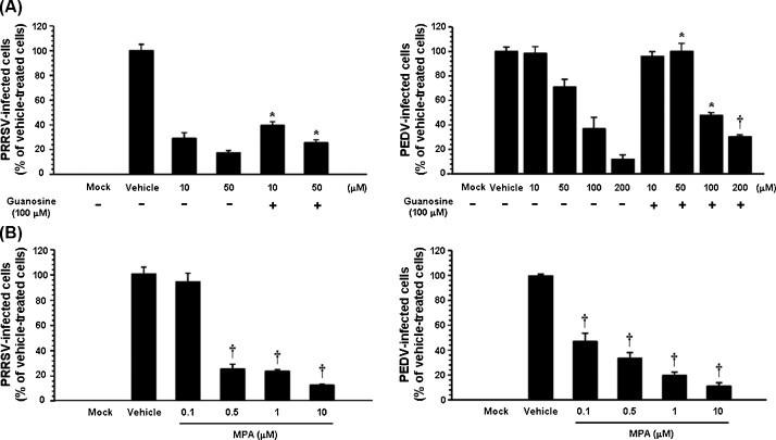 Effects of supplementation of guanosine in ribavirin treatment and MPA on porcine nidovirus infection. (A) Effect of ribavirin alone or with guanosine (100 μM) on the replication of PRRSV (left) and PEDV (right). PAM-pCD163 and Vero cells were preincubated with various concentrations of ribavirin with (+) or without 100 (−) μM guanosine. Virus-infected cells were fixed at 48 hpi and subjected to immunofluorescence assay. Viral productions were measured by quantifying the number of cells expressing N proteins through IFA as described above. Viral productions in cells treated by guanosine and ribavirin that were significantly different from those in cells treated with ribavirin alone are indicated. (B) Effect of MPA on the replication of PRRSV (left) and PEDV (right). PAM-pCD163 and Vero cells were preincubated with various concentrations of MPA ranging from 0 (mock) to 10 μM and infected with PRRSV or PEDV. At 48 hpi, virus-infected cells were subjected to immunofluorescence assay, and viral productions were measured by quantifying the number of cells expressing N proteins through IFA as described above. Data are representative of the mean values from three independent experiments and error bars represent standard deviations. * P = 0.001–0.05; † P
