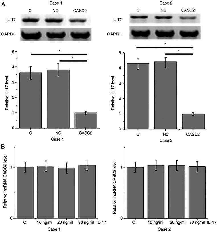 lncRNA CASC2 is a potential upstream inhibitor of IL-17 in HFLSs. (A) Overexpression of lncRNA CASC2 inhibited IL-17 expression in HFLSs, while (B) treatment with IL-17 did not significantly affect the expression of lncRNA CASC2 (*P