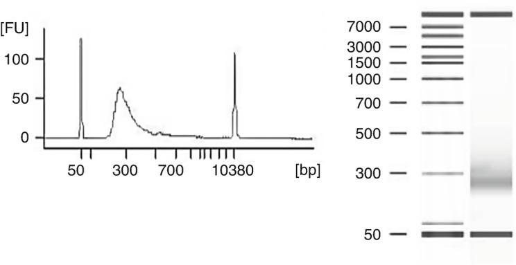 Analysis of fragment library using Agilent 2100 Bioanalyzer and DNA 7500 kit