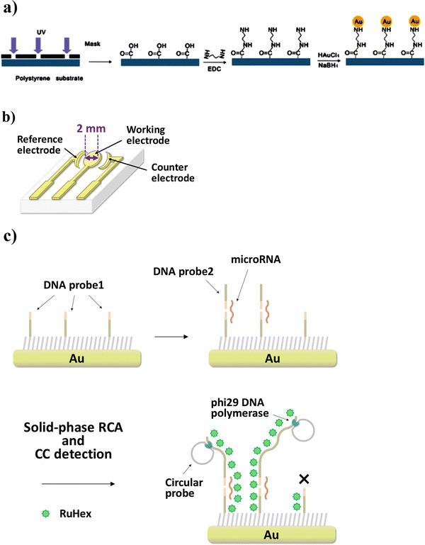 RCA-CC biosensor for microRNA detection. ( a ) Integrated gold electrodes were fabricated on polystyrene substrate by chemical plating. ( b ) Schematic illustration of three-gold electrode substrate. ( c ) After immobilization of DNA probe 1 on the working electrode, microRNA and DNA probe 2, which are partly complementary, hybridize to it, and then solid-phase RCA is initiated by phi29 DNA polymerase at 30 °C. If no hybridization takes place, the RCA reaction does not proceed