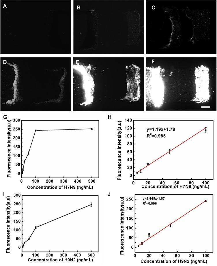 (A–F) Fluorescence microscopic images of different concentrations of samples (0, 10.0, 20, 50.0, 100.0, and 500.0 ng/mL, respectively). (G) Fluorescence intensity for H7N9 HA in 5−500 ng/mL. (H) Linear response for H7N9 HA with the concentration range of 5.0–100.0 ng/mL. (I) Fluorescence intensity for H9N2 HA in 5−500 ng/mL. (H) Linear response for H9N2 HA with the concentration range of 5.0–100.0 ng/mL. Error bars indicate the standard deviation of three experiments. The scale bar is 10 μm.