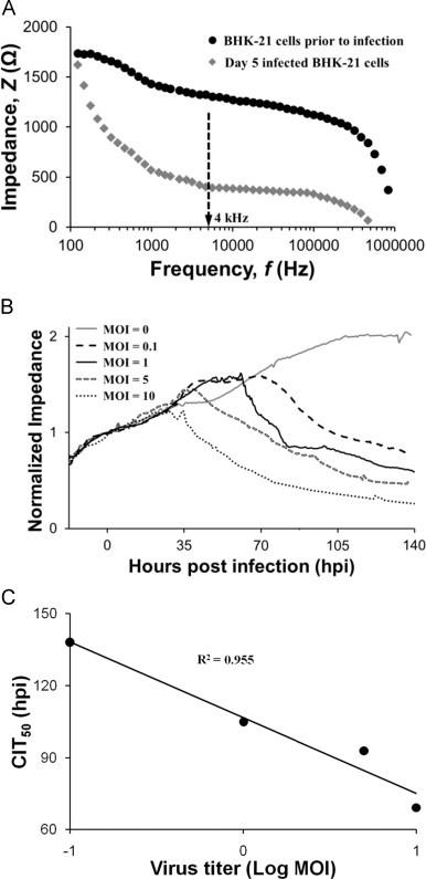 (A) EIS Bode diagram recorded in a frequency range of 100 Hz to 1 MHz shows the impedance signal response of the BHK-21 cell-based biosensor measured prior to infection (•), and during day 5 of infection (♦) with DENV-2 (NGC strain) at MOI=5. (B) BHK-21 cell-based biosensor impedance signal as a function of DENV-2 NGC infection time at different MOI (0, 0.1, 1, 5, 10). Impedance signal response in the presence of virus ( Z virus ) was normalized against the impedance signal response derived from the same biosensor in the absence of virus at 0 hpi ( Z virus =0). EIS data were recorded at open circuit potential, frequency of 4 kHz, and excitation amplitude of 10 mV. Vertical lines for each MOI indicate the onset of CPE. (C) Plot of CIT 50 against the logarithm of virus titer (MOI). CIT 50 refers to the time taken for 50% reduction in cell impedance.