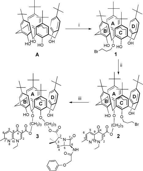 Synthetic pathway leading to podand  3 . (i) Br(CH 2 ) 3 Br, MeCN, 0.6 K 2 CO 3 , 7h, 37%; (ii) bromopropylnalidixate, MeCN, K 2 CO 3 , 48h, 20%; (iii) penicillin V, potassium salt ( PVK ), DMF, 35°C, 48h, 73%. Numbers and letters refer to NMR analyses.