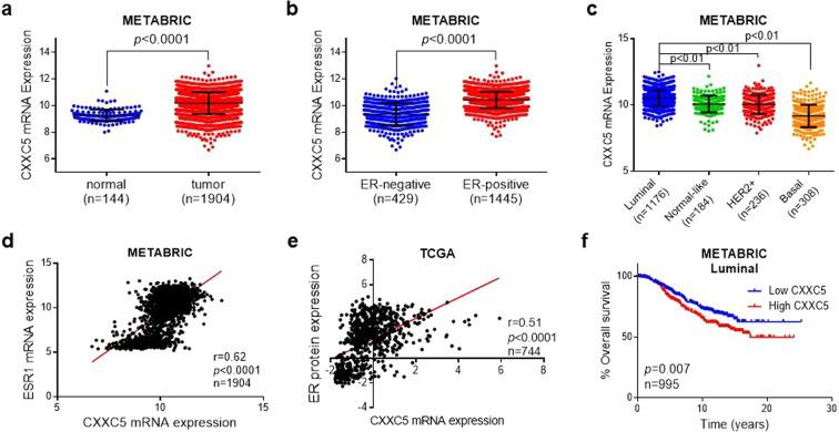 Clinicopathological relevance of CXXC5 expressions in breast cancer patients. ( a ) CXXC5 expression in breast cancer (BC) as compared to normal breast tissue from METABRIC. (b) CXXC5 expression in ER-negative versus ER-positive breast cancer patients from METABRIC. (c) CXXC5 expression in different molecular subtypes of tumors of breast cancer patients from METABRIC. (d) Pearson correlation analysis between mRNA expressions of CXXC5 and ESR1 (ERα) in patients from METABRIC. (e) Pearson correlation analysis between mRNA expression of CXXC5 and ERα protein level in breast cancer patients from TCGA. (f) Kaplan Meier survival analysis of basal breast cancer patients based on CXXC5 expression separated from the median.