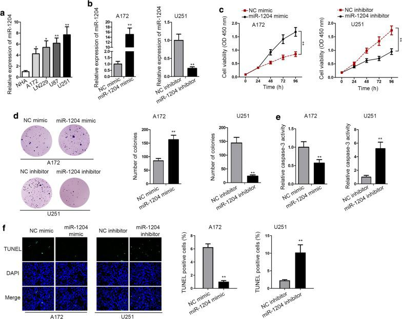 MiR-1204 was highly expressed in GBM and promoted GBM. a The upregulation of miR-1204 in GBM cells was confirmed by RT-qPCR. b The overexpression efficiency of miR-1204 in A172 cells and the knockdown efficiency of miR-1204 in U251 cells were confirmed by RT-qPCR. c , d The proliferation of transfected A172 and U251 cells was examined by CCK-8 and colony formation assays. e , f The apoptosis of transfected cells was analyzed by caspase-3 and TUNEL assays. U6 served as internal control for miR-1204 expression detection. *P