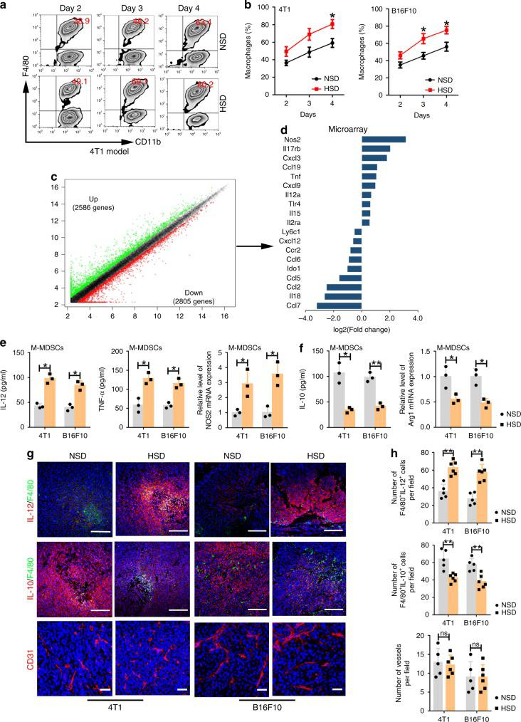 HSD promoted MDSC differentiation and functional transformation. a , b M-MDSCs purified in tumour tissues from the NSD or HSD group were cultured in RPMI-1640 medium containing 10% FBS and 10 ng ml −1 GM-CSF for 2, 3 or 4 days. Population of CD11b + F4/80 + cells was evaluated by flow cytometry. One-way ANOVA with post hoc Bonferroni correction; n = 10 mice per group; * p