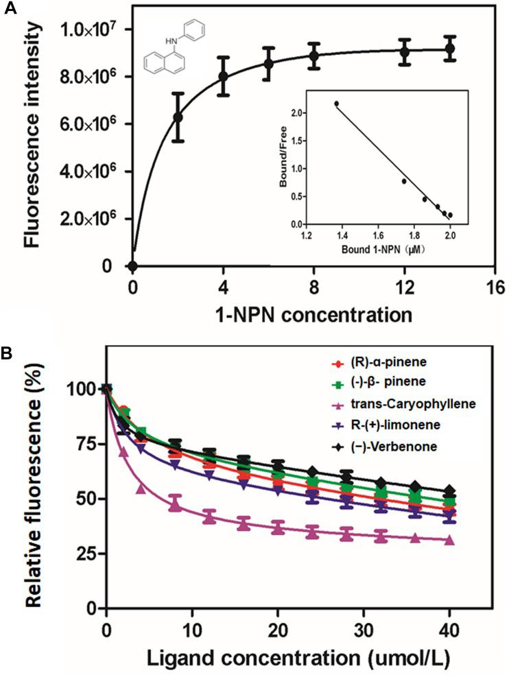 Binding affinity of MaltOBP1. (A) Binding curve and relative Scatchard plot of MaltOBP1 and 1-NPN. (B) Competitive binding curves of selected volatile host plant compounds to MaltOBP1.