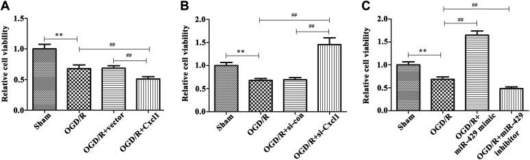 Effects of Cxcl1 and miR-429 on cell viability in OGD/R-treated BMECs. A, The cell viability in sham group, OGD/R-treated group, vector group, and overexpression of Cxcl1 group, ** P