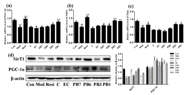Effects of flavan-3-ols on expression of mitochondrial biogenesis-related protein in insulin-resistant 3T3-L1 adipocytes. RT-PCR analysis of mRNA levels of, ( a ) <t>PGC-1α,</t> ( b ) NRF1, and ( c ) Tfam. ( d ) Western blot analysis of expression of SirT1 and PGC-1α. Fully differentiated 3T3-L1 adipocytes were treated with Dex for 48 h in the presence or absence of flavan-3-ols or rosiglitazone. Con, normal differentiated 3T3-L1 adipocytes; Mod, Dex alone treated differentiated 3T3-L1 adipocytes; Rosi, rosiglitazone; C, catechin; EC, epicatechin; PB7, procyanidin B7; PB6, procyanidin B6; PB3, procyanidin B3; PB1, procyanidin B1. Values are shown as Mean ± SD of three independent triplicate experiments ( n = 3). # p