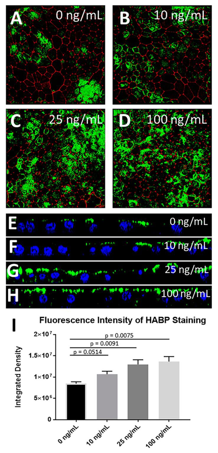 <t>FGF-2</t> induces HA accumulation in primary RPE cells. ( A – D ) FGF-2 induced HA accumulation in primary porcine RPE cells in a dose-dependent manner ( A ) 0 ng/mL, ( B ) 10 ng/mL, ( C ) 25 ng/mL, ( D ) 100 ng/mL. Fluorescence intensity was quantitated by integrated density measurement ( I ) (n ≥ 4, for each cell line). Data are presented as mean ± SEM ( E – H ) Z-plane images show that increased concentrations of FGF-2 induce increased apical accumulation of HA in addition to some peri-cellular and basal deposits of HA at high doses of FGF-2. Green: HA, red: phalloidin; blue: DAPI.