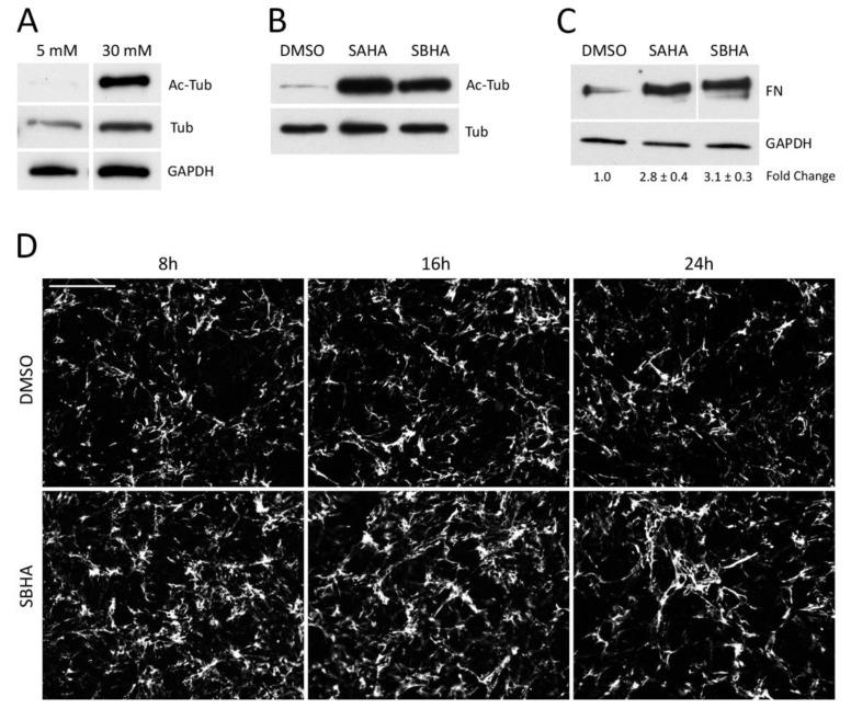 Increased acetylation promotes fibronectin (FN) matrix assembly. ( A ) Mesangial cells grown in 5 mM or 30 mM glucose for 48 h were lysed in RIPA buffer. ( B , C ) Mesangial cells grown in 30 mM glucose were treated with either 5 μM suberoylanilide hydroxamic acid (SAHA) or suberohydroxamic acid (SBHA) or DMSO (vehicle control) in medium containing 20 μg/mL human plasma FN for 24 h before lysis in <t>deoxycholate</t> <t>(DOC)</t> buffer. ( A , B ) RIPA and DOC-soluble lysates were immunoblotted with antibodies against acetyl-tubulin (Ac-Tub), tubulin (Tub) or GAPDH as indicated. ( C ) The DOC-insoluble fraction was immunoblotted with HFN7.1 anti-FN monoclonal antibody. Fold-changes are the average of three independent experiments ( p