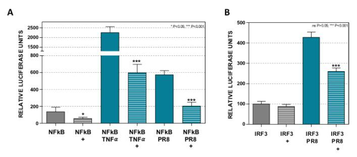 Dot1L controls NF-κB and IRF3 activation. A549 cells were left untreated or treated with 1 μM EPZ (+), 48 h later the cells were ( A ) transfected with a plasmid expressing luciferase under the NF-κB promoter (NF-κB) and at 24 hpt they were stimulated with TNF-α β20 ng/mL, NF-κB-TNFα), or infected with influenza virus (PR8, MOI 1, NF-κB-PR8), and the luciferase activity was evaluated at 16 h later; ( B ) transfected with reporter plasmid p55-IRF3 expressing luciferase under the IRF3 promoter, and the luciferase activity was evaluated 16 h later. In all cases, the luciferase activity values were normalized by Renilla luciferase and they were expressed relative to their corresponding EPZ untreated control conditions. Three technical replicates of three independent experiments were analyzed. ns p > 0.05; * p