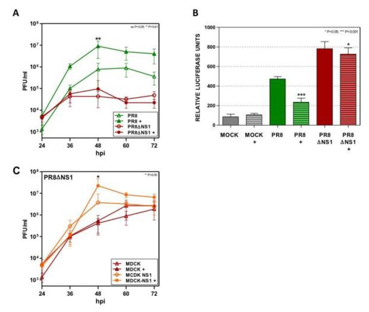 Dot1L does not affect viral replication or IFN-β promoter stimulation in delNS1 virus infected cells. ( A ) A549 cells were plated in the presence or absence of EPZ 1 µM and 48 h later they were infected at MOI 10 −3 with PR8 or delNS1 (PR8ΔNS1). The virus titer was determined with a plaque assay on MDCK cells. ( B ) A549 cells were left untreated or treated with 1 μM Dot1L inhibitor (+) and 48 h later they were transfected with the plasmid pIF-LukTer. At 24 h post-transfection, the cells were left uninfected (MOCK), or infected with influenza virus (PR8) or delNS1 virus (PR8ΔNS1) at MOI 1 and the luciferase activity was evaluated 16 h later. The luciferase activity normalized by Renilla luciferase in the MOCK condition without EPZ treatment was taken as 100%. ( C ) MDCK or MDCK-NS1 cells were plated in the presence or absence of EPZ 1 µM and 48 h later they were infected at MOI 10 −3 with delNS1. The virus titer was determined by plaque assay on MDCK cells. EPZ was present all throughout the experiment in the EPZ-treated cells. Three technical replicates of three independent experiments were analyzed. ns p > 0.05; * p