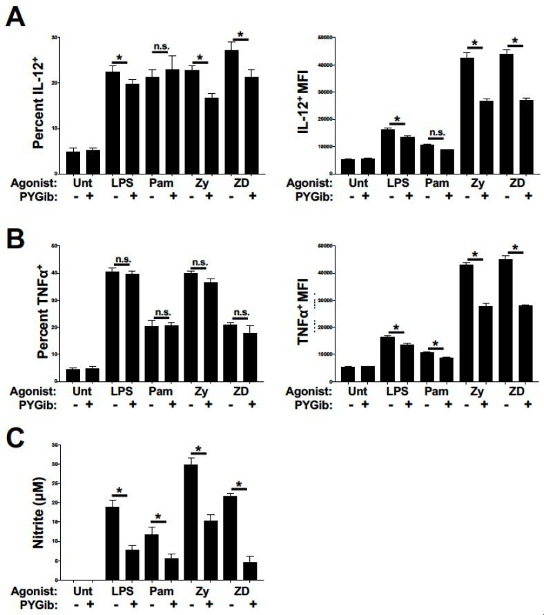 Glycogen phosphorylase inhibition causes deficits in inflammatory cytokine expression and nitric oxide production in response to TLR and Syk-dependent CLR agonists: ( A and B ) DCs were stimulated for 6 h with the indicated ligands and GolgiPlug reagent (LPS = lipopolysaccharide, Pam = Pam2CSK4, Zy = Zymosan, and ZD = Zymosan depleted) in the presence or absence of PYG inhibitor (PYGib), and then assessed by flow cytometry for intracellular expression of IL-12p70 ( A ) and TNFα ( B ). The percent of cytokine-positive cells (from total CD11c+ cells) is depicted in the left panels, while the mean fluorescence intensities of cytokine-positive cells are depicted in the right panels. ( B ) Percent of CD40 and CD86 double-positive cells for each condition as depicted in ( A ). ( C ) DCs were stimulated for 18 h with the indicated conditions as above, and supernatants were then collected and analyzed for nitrite accumulation by Griess assay. For all graphs, statistical values are represented with an asterisk (*) as significant when p values are equal to or below 0.05, with mean +/− SD shown, n = 4.