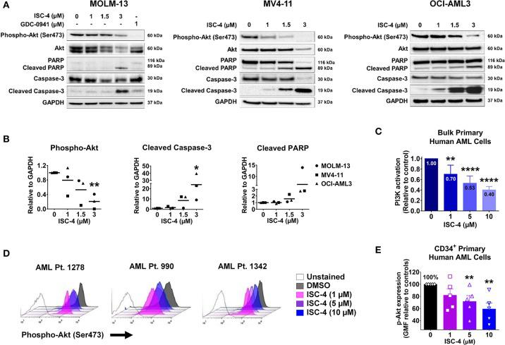 Inhibition of Akt signaling in AML by <t>ISC-4.</t> (A) Western blot analysis of AML cells exposed to increasing concentrations of ISC-4 or GDC-0941 (1 μM) for 24 h. GAPDH was used as a loading control. (B) Densitometric quantification of western blot bands. (C) Detection of PI3K activation by flow cytometry in bulk primary human AML cells ( n = 3). (D,E) Flow cytometric detection of phospho-Akt (p-Akt) in CD34 + primary human AML cells ( n = 5) after treatment with DMSO or ISC-4 (1–10 μM). Results are mean ± standard error of the mean (SEM). * P