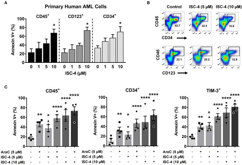 ISC-4 induces apoptosis in primary human leukemic stem cells. (A) Dose-dependent apoptotic response of bulk primary human cells (CD45 + ), or leukemic stem cells (CD34 + or CD123 + cells) to ISC-4. Error bars are mean ± SEM. (B) Reduction in leukemic stem cells after ISC-4 treatment in AML Pt. 1172. (C) Apoptosis in CD45 + , CD34 + , or TIM-3 + cells after ISC-4 and cytarabine (AraC) combination treatment. Error bars are mean ± SEM. * P