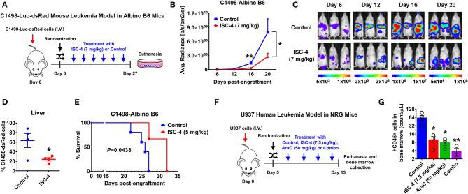 ISC-4 inhibits leukemia progression in vivo and extends overall survival. (A–D) Albino B6 mice ( n = 3) transplanted with Luciferase and dsRed-expressing C1498 (C1498-dsRed-Luc) were treated either with vehicle control (DMSO) or ISC-4 (7 mg/kg). (A) Experimental scheme of C1498 animal study. (B,C) The decrease in the leukemic burden of ISC-4-treated mice monitored by bioluminescence imaging over the time course of the study. Data are mean ± SEM, * P