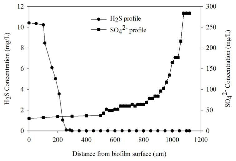 H 2 S and SO 4 2− microelectrode profiles within the biofilm.
