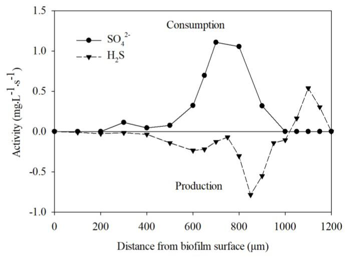 The net specific consumption and production rates of H 2 S and SO 4 2− in the membrane-aerated <t>biofilm</t> (MAB) biofilm.
