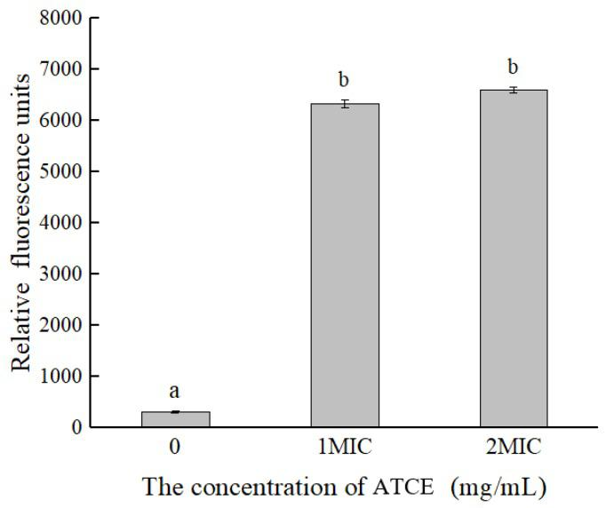 Differences in membrane potentials of S. aureus ATCC 13565 after treatment with ATCE at 0, 1, and 2 MIC. Values denote the means of triplicate measurements. Error bars represent standard deviation ( n = 3). Different lowercase letters (a,b) represent significant differences ( p
