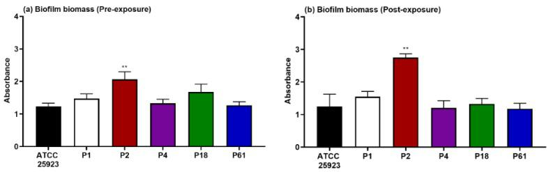 Biofilm biomass produced by S. aureus ATCC 25923 in comparison with five clinical strains resulting after 18 h incubation ( a ) and 42 h incubation ( b ). Statistical differences are indicated in comparison to the collection strain, ** p