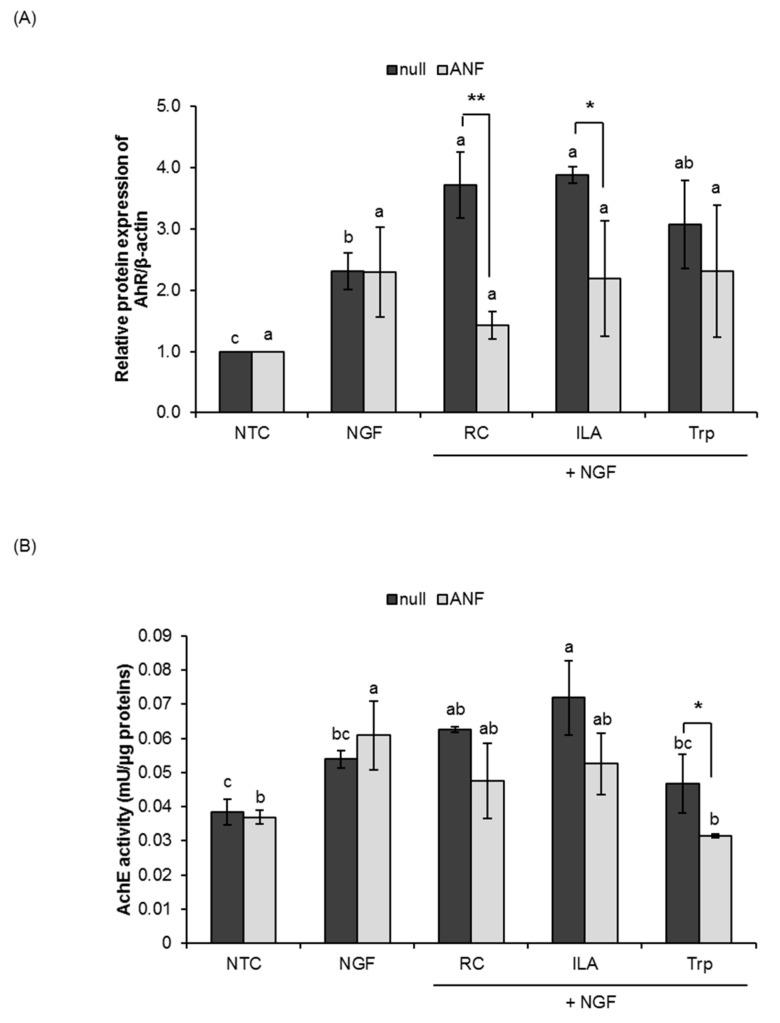 Effects of indole-3-lactic acid (ILA) on the aryl hydrocarbon receptor (AhR) in PC12 cells. PC12 cells were pretreated with the AhR antagonist, α-naphthoflavone (ANF; 1 µM), for 1 h and treated for five consecutive days with NGF (25 ng/mL) and RC, ILA or Trp (100 nM). Nonpretreated PC12 cells served as a null control. ( A ) AhR protein (95 kDa) in PC12 cells was detected by Western blot analysis using a monoclonal antibody specific for AhR. The corresponding β-actin blot served as a loading control. ( B ) Acetylcholinesterase (AchE) activity in PC12 cells. The data represent the mean ± SD of three replicates. * p