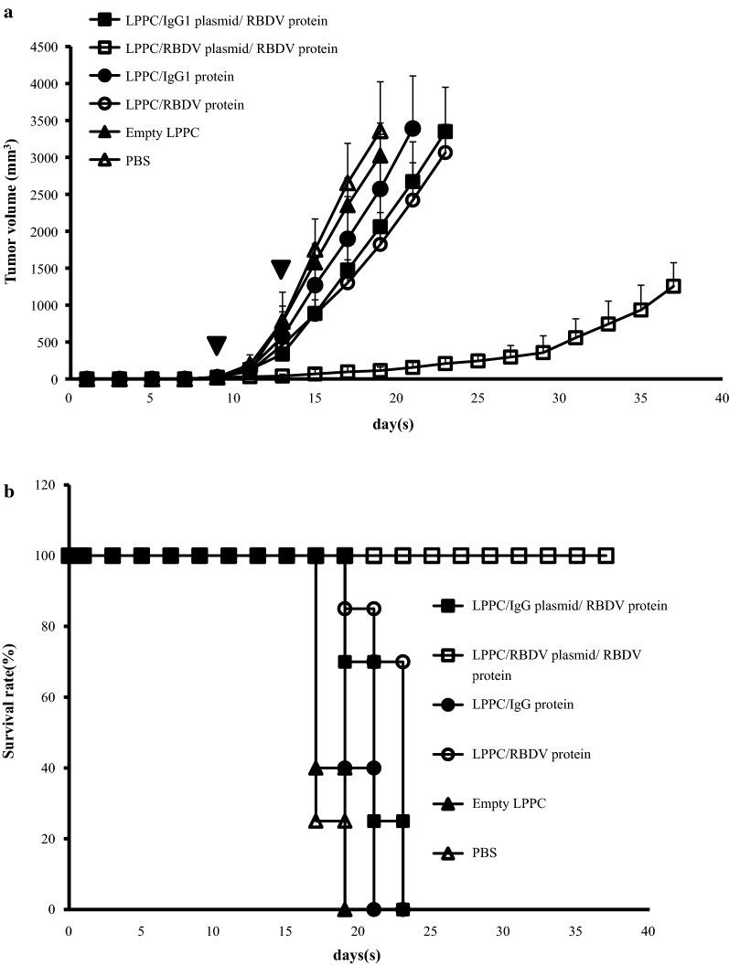 Inhibition of tumour growth by the LPPC/RBDV-IgG1 Fc plasmid/RBDV-IgG1 Fc protein. a Female C57BL/6 mice (6–8 weeks of age) were subcutaneously inoculated with 1 × 10 6 cells in 100 mL of PBS. When the average tumour volume reached 30 mm 3 , the mice were i.v. injected with LPPC/RBDV-IgG1 Fc plasmid/RBDV-IgG1 Fc protein or other groups and injected again after four days. Inverted filled triangle means the day of complex injection. Tumour volume was measured every 2 days after injecting the complexes, and the mice were sacrificed when the tumour grew to a size of 2500 mm 3 . The data represent the mean tumour volume ± SD (n = 7). b The survival rate of C57BL/6 mice bearing B16-F10 tumours treated with LPPC/RBDV-IgG1 Fc plasmid/RBDV-IgG1 Fc protein or other groups. LPPC, which encapsulated with RBDV or IgG1 Fc, were all complexed by PEG
