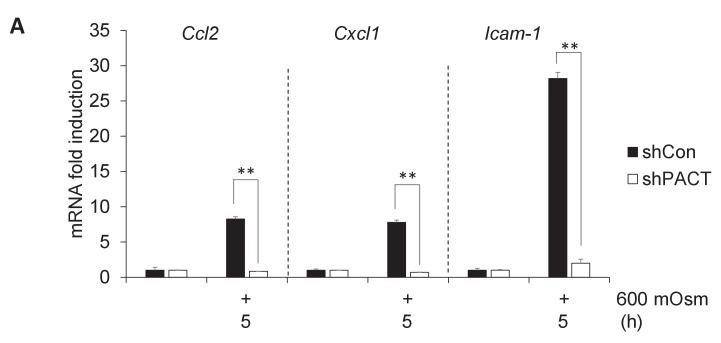 Additional proinflammatory gene expression programs are also dependent on PACT. ( A ) MEFs deficient in PACT were treated with the indicated stress intensity. RNA was isolated, and mRNA transcript levels analyzed via RT-qPCR.