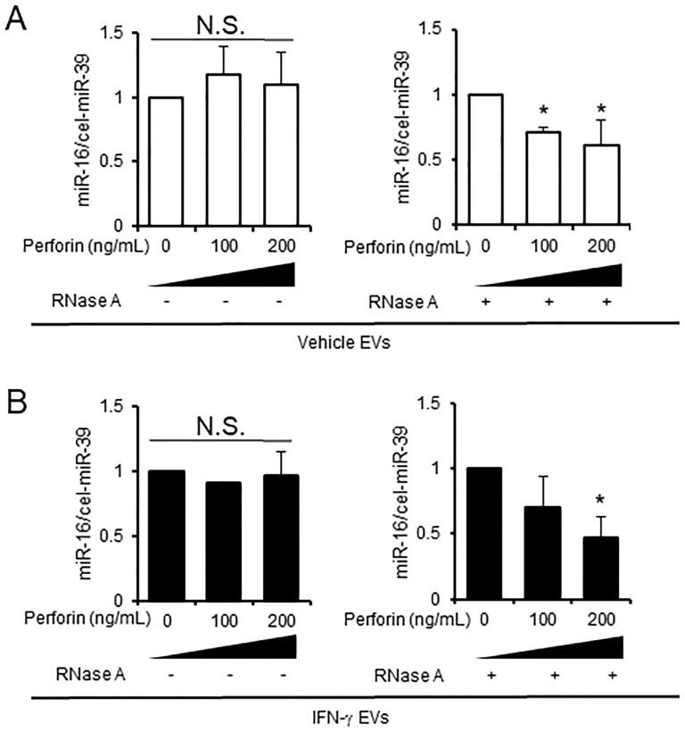 Measurement of the EV destruction by perforin. (A) EVs from vehicle-treated D3H2LN cells (vehicle EVs). (B) EVs from IFN-γ-treated D3H2LN cells (IFN-γ EVs). Both types of EV were treated with or without perforin, and miRNAs were degraded by RNase A (right panels). MiRNA degradation was measured by real-time PCR; cel-miR-39 was used as a spike-in control. P