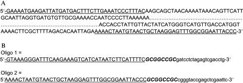 Assembly vector primer design . (A) A linear DNA sequence that is to be assembled into a vector. The first and last 40 bp of DNA sequence is underlined. (B) Two primers that could be used to PCR-amplify pUC19 to produce a vector containing overlaps to the sequence shown in (A), thus producing a circle. The primer sequences include regions that can anneal to pUC19 (nonbolded, lowercase), Not I restriction sites (bolded and italicized, uppercase) to release the insert from the vector, and 40-bp overlaps (underlined, uppercase) to the ends of the DNA sequence shown in (A).