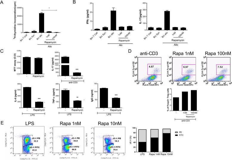 Rapamycin suppresses T cell alloreactivity, proinflammatory cytokines, and production of immunoglobulin and induces mitochondrial dysfunction in vitro. a In a mixed lymphocyte reaction assay, B/c splenic T cells (responders) were incubated with irradiated B/c splenic antigen-presenting cells for 4 days. Responder cells were cultured in the presence or absence of rapamycin. b IFN-γ and IL-17 levels in the supernatants, as measured by enzyme-linked immunosorbent assay (ELISA). c IL-17, IL-6, TNF-α, and <t>IgG</t> concentrations in culture supernatants in the presence of anti-CD3 (0.5 μg/ml) or lipopolysaccharide (100 ng/ml) with rapamycin 100 nM, as determined by ELISA. d The Treg population, as determined by flow cytometry. e JC-1 populations in isolated splenic cells, as determined by flow cytometry. The data are representative of at least three independent experiments. Data represent the mean ± SD of three independent experiments. ** P