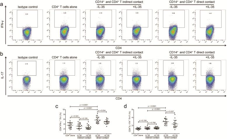 Recombinant interleukin (IL)-35 stimulation to CD14 + monocytes induced naïve CD4 + T cell activation in patients with Kawasaki disease ( n = 18). CD14 + monocytes and CD4 + T cells were purified from peripheral bloods of Kwasaki disease patients. CD14 + monocytes were stimulated with recombinant human IL-35 (50 ng/ml) and 1 × lipopolysaccharide for 24 h. Direct contact and indirect contact co-culture system was set up between 10 5 of CD14 + monocytes and 10 5 of autologous CD4 + T cells. In the last 12 h of co-culture, phorbol 12-myristate 13-acetate (50 ng/ml), ionomycin (1 μg/ml), and Brefeldin A (10 μg/ml) were added. Cells were harvested 48 h post co-culture, and were stained with anti-CD4, anti-interferon-γ (IFN-γ), and anti-IL-17A for flow cytometry analysis. The isotype control was used for separation of positive and negative cells of IFN-γ and IL-17A. Typical flow dots analyses for (a) CD4 + IFN-γ + Th1 cells and (b) CD4 + IL-17A + Th17 cells in direct contact and indirect contact co-culture systems. (c) CD4 + IFN-γ + Th1 and (d) CD4 + IL-17A + Th17 percentage was elevated in direct contact co-culture system when compared with in indirect contact co-culture system or in CD4 + T cell cultured anlone. However, there was no significant difference of (c) Th1 or (d) Th17 percentage between CD4 + T cell cultured alone and CD14 + /CD4 + indirect contact co-culture system. IL-35 stimulation to CD14 + monocytes down-regulated (c) Th1 and (d) Th17 percentage in direct contact co-culture system, but not in indirect contact co-culture system. Paired t test was used for comparison. Individual level of each subject was shown. The horizon line presented mean, and error bar presented standard deviation