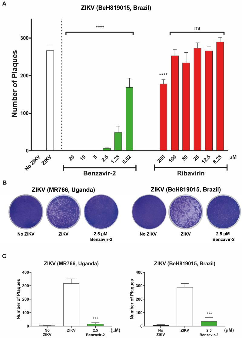 Antiviral activity of benzavir-2 and ribavirin against wild-type Zika virus (wt ZIKV) infection by plaque inhibition assay. Vero B4 cells were seeded in 12-well plates (2 × 10 5 cells per well) and viruses (300 PFUs), together with benzavir-2 or ribavirin in Dulbecco's modified Eagle medium (DMEM) with 1% carboxymethylcellulose (CMC), was added. The cells were incubated for 4 days. Next, cells were fixed with 4% paraformaldehyde and stained with 1% crystal violet solution. ( A ) Dose-dependent plaque-forming assay of the benzavir-2 effect against the Asian wt ZIKV lineage (BeH819015, Brazil strain). The assay was performed with 2-fold serial diluted benzavir-2 (from 20 to 0.62 µM) or 2-fold serial diluted ribavirin (200 to 6.25 µM). ( B ) Plaque forming assay at one benzavir-2 concentration (2.5 µM) for two wt ZIKV lineages (Asian BeH819015, Brazil strain and the African lineage MR766, Uganda strain). The results were visualized after crystal violet staining. ( C ). Quantification of the number of plaques in B. For all experiments, quantification data were analyzed by combining three independent experiments. Statistical significance was determined by one-way analysis of variance (ANOVA), followed by Dunnett's multiple-comparisons test. *** p
