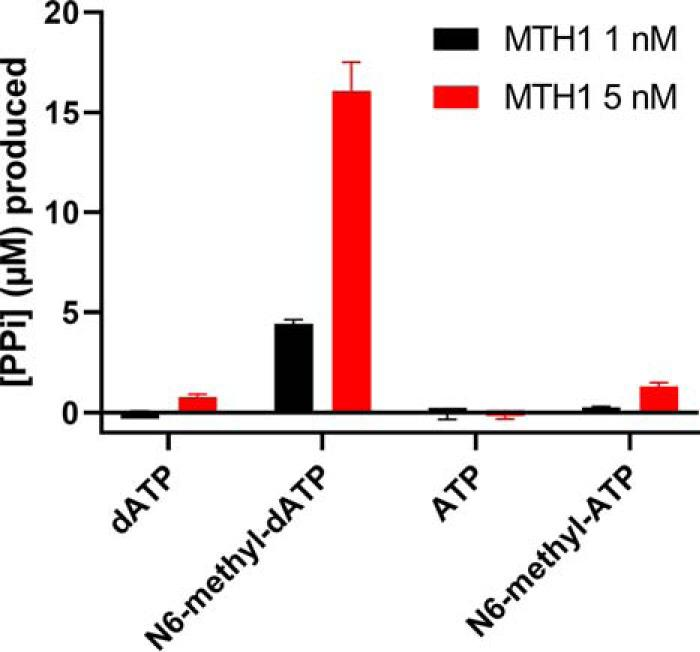MTH1 activity with N6-methyl-dATP and N6-methyl-ATP compared with dATP. Activity of 1 and 5 n m MTH1 was tested with 50 μ m N6-methyl-dATP, dATP, ATP, and N6-methyl-ATP in MTH1 reaction buffer (pH 8.0) at 22 °C. Reaction time was 30 min and 0.2 units/ml of PPase was used to generate P i from produced PP i . P i was detected by addition of malachite green reagent followed by measurement of the absorbance at 630 nm. Controls with PPase only was included and background signal was subtracted from the assay data. A P i standard curve was included on the plate enabling determination of the concentration of formed PP i . Graph shows mean ± S.D. from one experiment performed in quadruplicate.
