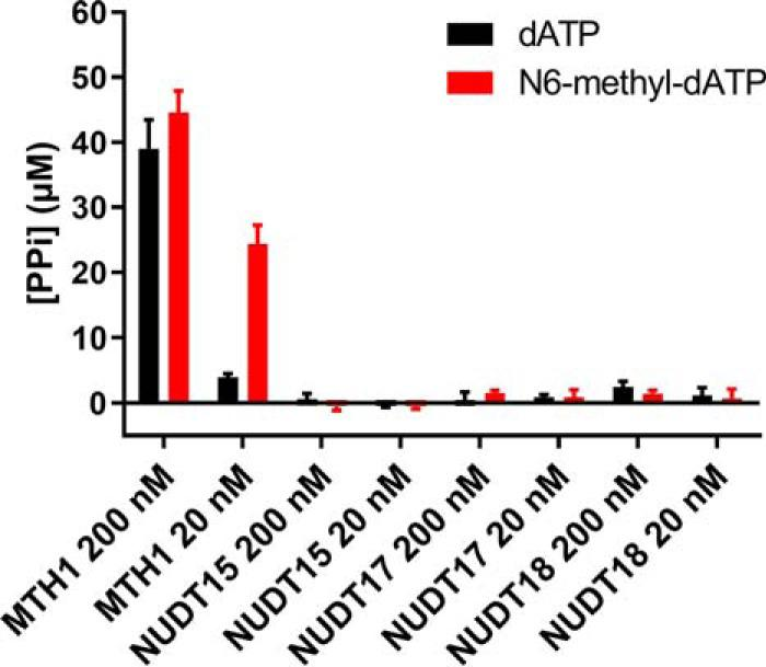 Activity with N6-methyl-dATP is unique to MTH1 within human NUDIX subfamily. Activities of human NUDIX enzyme (MTH1, NUDT15, NUDT17, and NUDT18) were assayed with data points in quadruplicate with 50 μ m dATP or N6-methyl-dATP at 20 and 200 n m enzyme in MTH1 reaction buffer (pH 8.0). 0.2 units/ml of PPase was used to convert formed PP i to P i that was detected using malachite green reagent and measurement of absorbance at 630 nm. Graph shows mean ± S.D. from one experiment performed in triplicate.