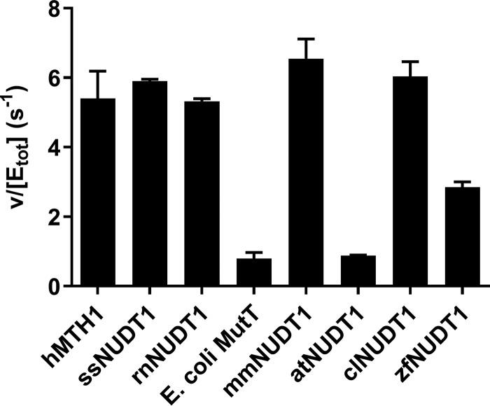 Activity with N6-methyl-dATP is evolutionary conserved among vertebrates. MutT homologues (MTH1 and NUDT1) from different animal species as well as E. coli MutT and NUDT1 from the plant A. thaliana were screened for hydrolysis activity with N6-methyl-dATP. Enzyme (1.25 n m ) was incubated with 50 μ m N6-methyl-dATP in MTH1 reaction buffer (pH 7.5) with 0.4 units/ml of PPase for 20 min at 22 °C in triplicates. P i was detected using Biomol Green (Enzo Life Sciences). Absorbance at 630 nm was read after 20 min. A P i standard curve was included on the plate and used to convert the assay signal to produced PP i . Data are shown as hydrolyzed N6-methyl-dATP (μ m ) divided by concentration of NUDT1 enzyme (μ m ) per second. The graph shows the mean ± S.D. from an experiment performed in triplicate.