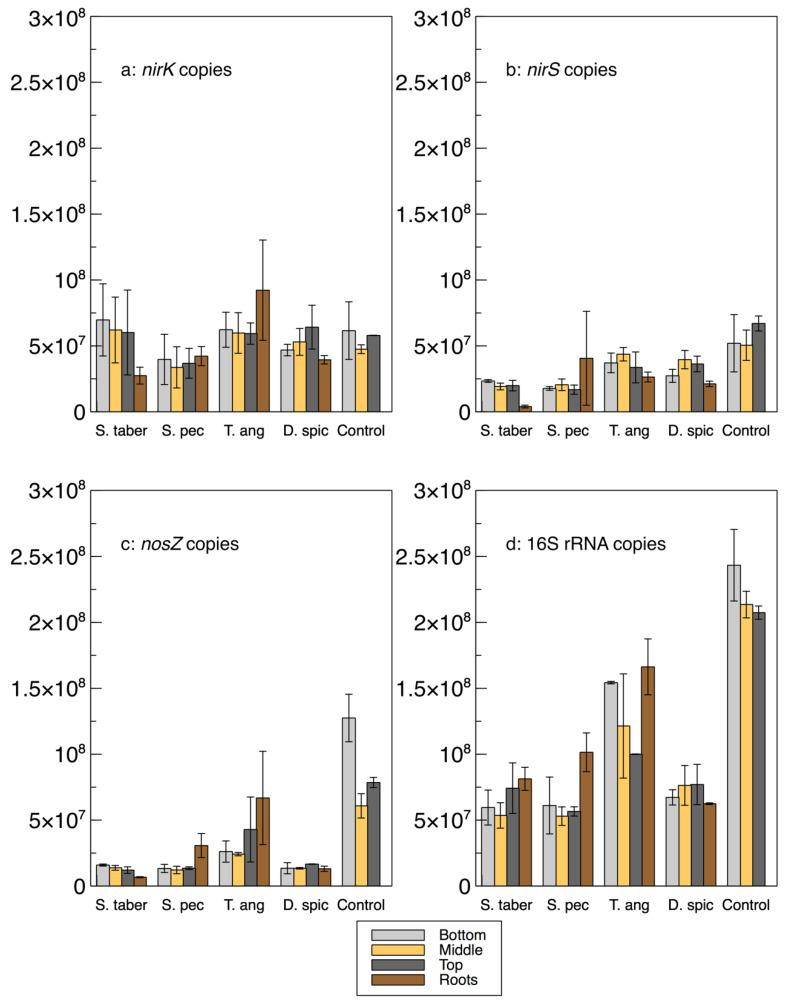 Gene copy numbers (a: nirK , b: nirS , c: nosZ and d: 16S rRNA) in the extracted biofilm from the bioreactors' media at 3 depths and in plant roots. Error bars: standard deviations.
