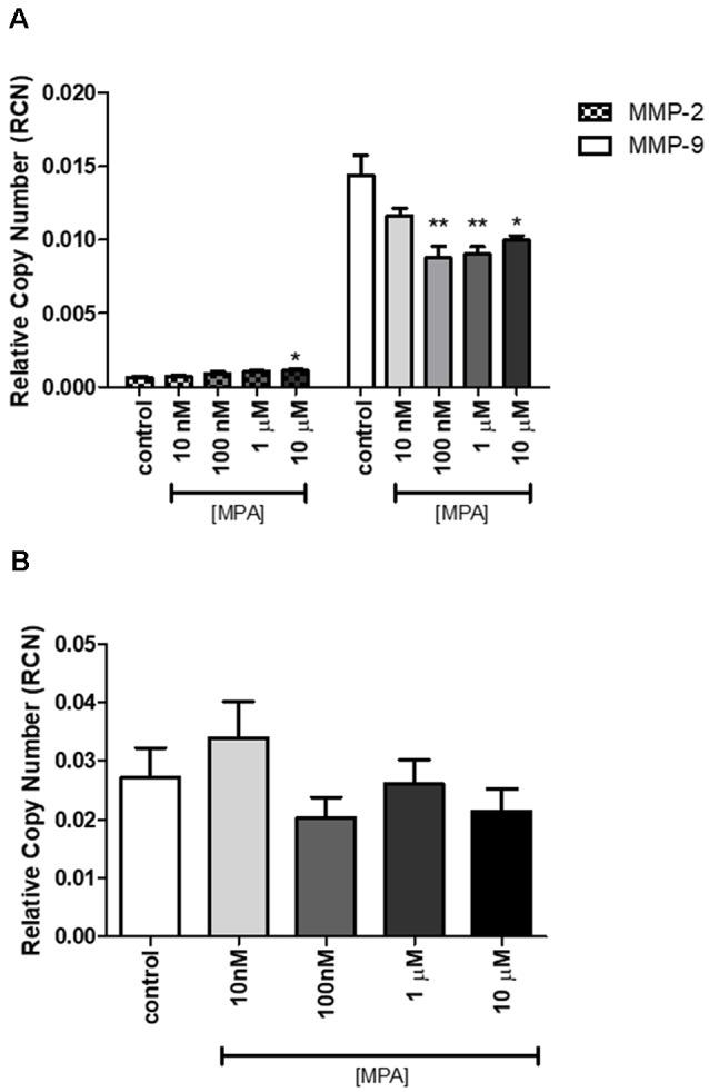 The effect of MPA treatment on MMP-2/-9 mRNA in C6 glial cells. (A) The mRNA levels of MMP-2 and MMP-9 were measured by qRT-PCR in C6 glial cells treated with MPA for 12-h, using MMP-2 and MMP-9 specific primers. (B) At 24-h, the suppression of MMP-9 mRNA levels is no longer detected. Data are represented by the mean ± SEM of three independent qRT-PCR experiments performed in duplicates. The expression levels are represented relative to the GAPDH reference gene. Results are representative of five independent experiments. * p