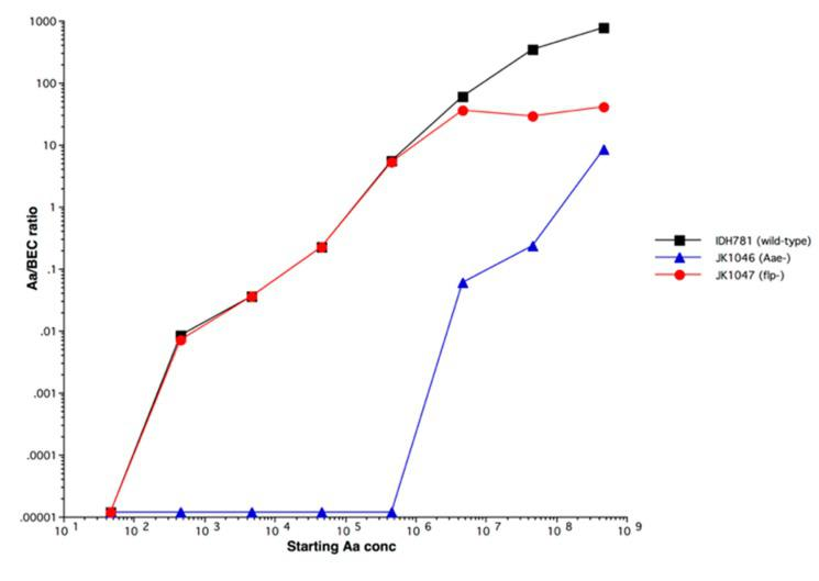 Kinetics of binding of A. actinomycetemcomitans to buccal epithelial cells (BECs).