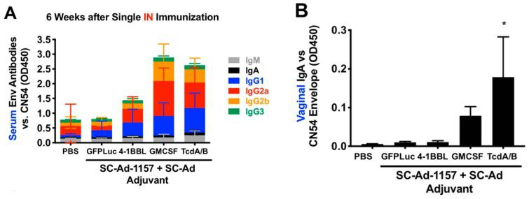 Effects of SC-Ad genetic adjuvants on clade C env antibody responses in mice after intranasal (IN) immunization. Groups of 10 female BALB/c mice were immunized with phosphate-buffered saline (PBS) or 10 9 vp of the indicated SC-Ads. Six weeks later, samples were collected for enzyme-linked immunosorbent assay (ELISA) vs. clade C CN54 gp140. ( A ) Sub-isotyping ELISA for the indicated samples at 1/200 dilution (low dilution used for low-sensitivity sub-isotyping kit). All IgG isotypes in the granulocyte macrophage colony-stimulating factor (GMCSF) and TcdA/B groups were significantly different than PBS by 2-way ANOVA. ( B ) ELISA OD450 levels are shown for 1/35 dilution of vaginal wash samples with detection by anti-IgA. * p