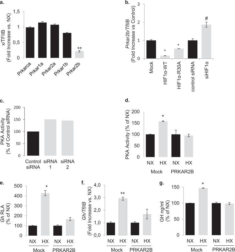 Hypoxia and <t>HIF-1α</t> downregulates the transcription of gene encoding for the PKA regulatory subunit RIIB. a Expression of the genes encoding for PKA regulatory and catalytic subunits in GH3 cells grown under hypoxic conditions (1% O 2 for 18 h) as determined by real-time RT-PCR. Data are