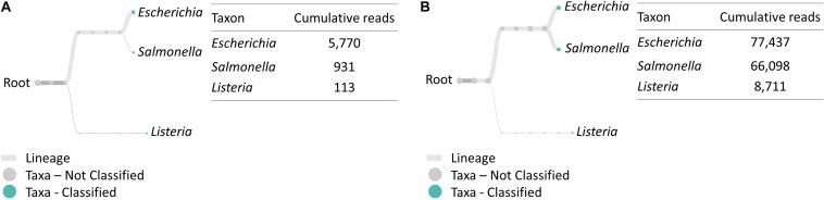 Taxonomic and genus level bacterial classification of MinION R9.4 Rev D multiplex RT-PCR amplicon sequencing. (A) Taxonomy tree of BHI 334 4-h sample generated by EPI2ME. (B) Taxonomy tree of LJE 334 4-h sample generated by EPI2ME.