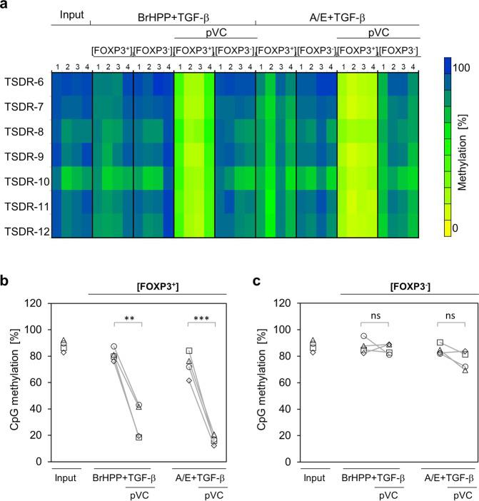 Phospho-Vitamin C induces demethylation of FOXP3 <t>TSDR</t> in TGF-β-expanded Vδ2 T cells. MACS-sorted Vδ2 T cells were activated with BrHPP or A/E-beads and expanded in complete medium supplemented with IL-2 and TGF-β and the additional presence or absence of pVC (50 µg/mL). On day eight, FOXP3 + and FOXP3 − Vδ2 T cells were sorted by FACS. Genomic <t>DNA</t> was isolated and subjected to pyrosequencing to determine the methylation status of TSDR. Input cells (MACS-sorted Vδ2 T cells) were included for comparison. ( a) Data from four independent experiments are depicted. Each row represents the methylation status of an individual CpG motif within the TSDR. The columns show data from independent donors under the indicated experimental conditions. The methylation rates were translated into a color code from yellow (0%) via green (50%) up to blue (100%). ( b,c) Graphs show the average methylation status of the TSDR in (b) FOXP3 + and (c) FOXP3 − Vδ2 T cells. Each symbol represents an individual donor. ** p