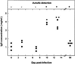 Time course of Ab to the 40‐kDa liver protein and plasma Ig level in MHV‐infected CBA/Ht mice. Upper panel: Western‐blot reactivity of serum from MHV‐infected CBA/Ht with the 40‐kDa liver protein (see Fig. 1 for details); (+) means that serum from all animals tested reacted with the mouse liver 40‐kDa protein; (–) means absence of reactivity. Lower panel: Total IgG concentration of the corresponding sera was determined as indicated in Sect. 4. Values correspond to individual mice. Results were subject to statistical analysis by using the Mann‐Whitney U‐test. * p