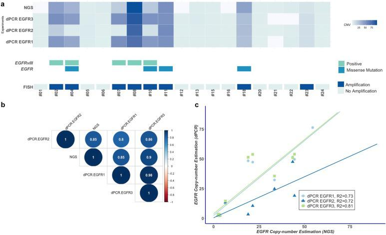 Concordance between the results of the dPCR assay, FISH, next-generation sequencing (NGS) and LD-RT-PCR for the detection of the EGFR amplification and EGFRvIII variant in the exploratory cohort ( n = 19). a Heatmap of EGFR copy number estimated by NGS and the three dPCR assays. Each column represents a tumor sample (n = 19). The blue gradient represents the estimated value of the EGFR copy number. There is a strong agreement between the EGFR1 and EGFR2 dPCR assays and NGS. The absence of results using the NGS experiment is indicated by the light gray color. Below the heatmap, the presence of EGFR mutations and EGFRvIII variant as well as the results of FISH are presented. The presence of somatic mutations was detected by the EGFR -targeted NGS panel, and the presence of the EGFRvIII variant was detected by LD-RT-PCR. Patient #08 harbors both the EGFR amplification and EGFRvIII variant with tumor heterogeneity regarding the copy number estimation by dPCR (EGFR1 63, EGFR2 70 and EGFR3 91). b Correlation matrix plot of EGFR copy number estimation using three dPCR assays (EGFR1, EGFR2 and EGFR3) and NGS ( n = 16). The dPCR EGFR3 assay results have the highest correlation with the NGS results. On the other hand, the dPCR EGFR2 assay results have the poorest correlation, mainly due to its underestimation of the EGFR CNV in the case of EGFRvIII -positive glioblastoma. c Linear regression curves representing EGFR copy number values estimated by NGS (x-axis) and the copy number estimated by the three dPCR assays (y-axis). As expected with the results of the matrix correlation plot, the estimation using the dPCR EGFR3 assay was confirmed to have the best correlation to the NGS estimation