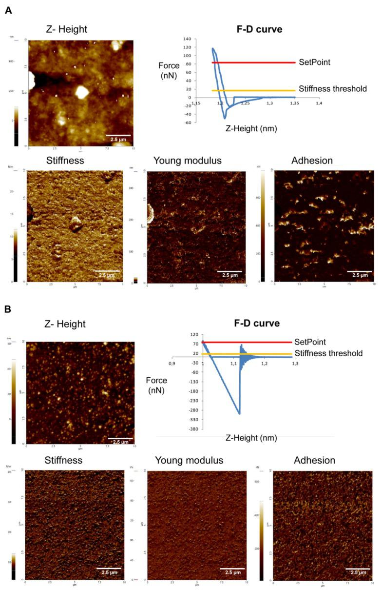 Atomic force microscopy Z-height images and nanomechanical maps showing stiffness, Young modulus and adhesion profile of the EVs of Acanthamoeba T5 incubated at 28 °C ( A ) and 37 °C ( B ) in PYG medium.