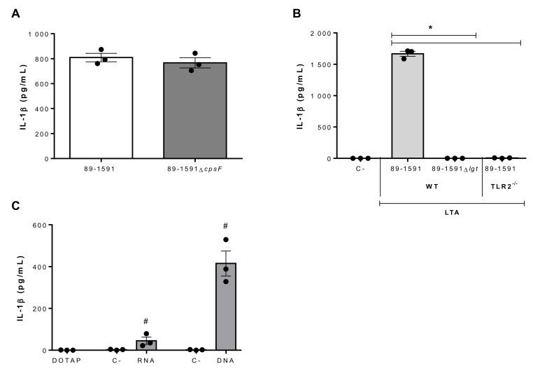 Role of SLY-negative S. suis strain 89-1591 components in bmDC-produced IL-1β. ( A ) IL-1β production by bmDCs following 16 h of infection with 1 × 10 6 CFU of strain 89-1591 or its capsular polysaccharide-deficient mutant (89-1591∆ cpsF ). ( B ) IL-1β production 24 h following activation of wild-type (WT) or TLR2 -/- bmDCs with 30 μg/mL of lipoteichoic acid (LTA) extracts from strain 89-1591 or its lgt -deficient mutant (89-1591Δ lgt ). Non-stimulated cells served as negative control (C-). ( C ) IL-1β production by bmDCs following phagosomal delivery of 1 μg of S. suis RNA or DNA. Cells stimulated with elution buffer served as negative control (C-). Data are expressed as mean ± SEM ( n = 3). * ( p