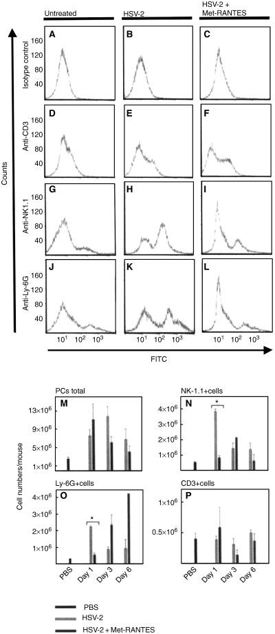 Effect of <t>Met‐RANTES</t> on total leucocyte numbers and accumulation of selected leucocyte subsets in the peritoneal cavity during herpes simplex virus type 2 <t>(HSV‐2)</t> infection. (A–L) Representative example of flow cytometric data on peritoneal cells (PCs) harvested day 1 after infection and stained with isotype control (A–C), anti‐CD3 (D–F), anti‐NK‐1.1 (G–I) or anti‐Ly‐6G (J–L). (M) Total number of PCs after intraperitoneal HSV‐2 infection. (N–P) Accumulative flow cytometric data on PCs harvested at the indicated time points after infection. (N) Anti‐NK‐1.1. (O) Anti‐Ly‐6G. (P) Anti‐CD3. Results are shown as mean ± SEM. * P